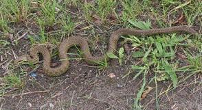そこのけそこのけヘビ様のお通りだ!