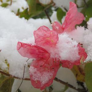 恵山ツツジの狂い咲き