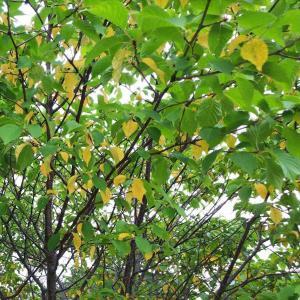 札幌は早くも秋か