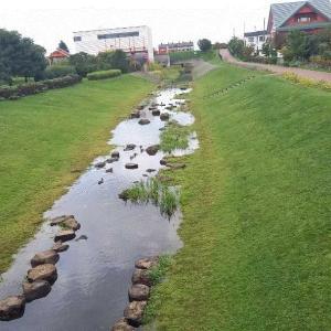 札幌市の公園に毒草が生えていた