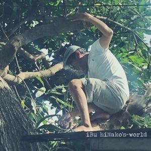 今朝もマンゴの木を剪定 @bali_life