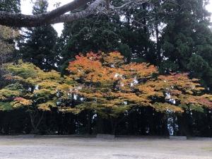 箸蔵寺の例祭参加