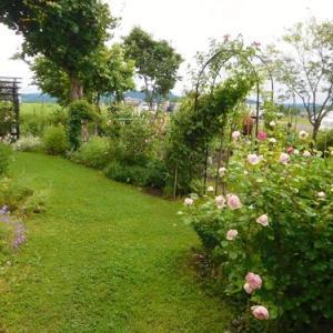 北海道の私の庭、今年の薔薇は厳しくて