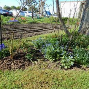 二―パッド・庭では青い花が