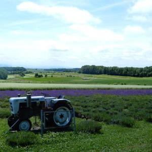 丘のラベンダー畑