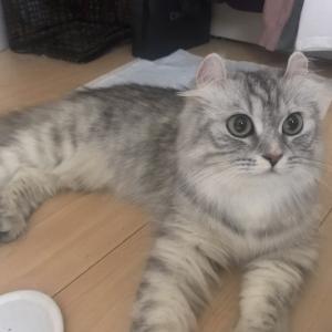 """""""中国人女性から託された猫"""""""