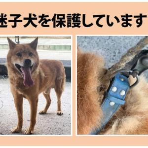 """""""★8月3日(火)募集期限★松山市保健所▪迷い犬を保護しています(下伊台町より)"""""""