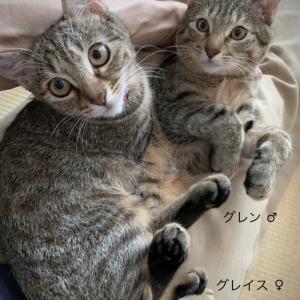 """""""第17回 猫の譲渡会 参加予定猫ちゃん♡ -2-"""""""