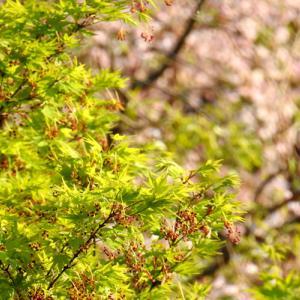 新緑の季節!