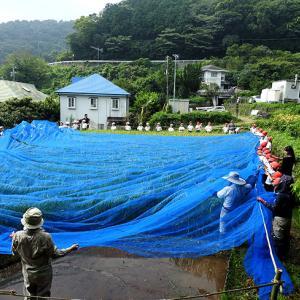稲の編みかけ「防鳥ネット」