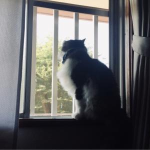 【ねこ部屋通信】猫にバレる。