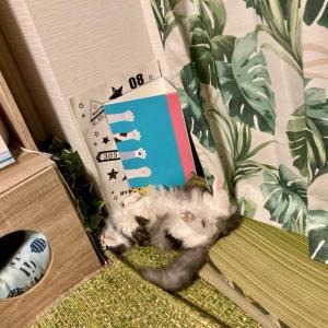 【ねこ部屋通信】真夏の猫写真館。