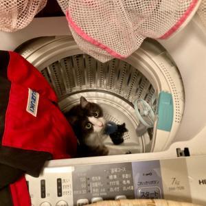 【ねこ部屋通信】洗っちゃうと困るから〜!
