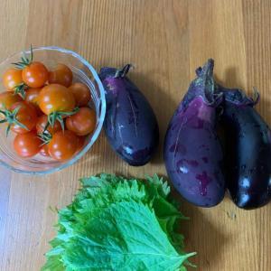 大葉、ナス、ミニトマト収穫!