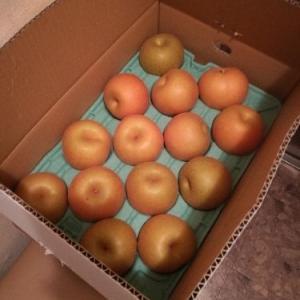 ふるさと納税、大阪府泉佐野市1万円分『幸水梨約5kg』が届きました