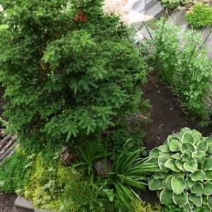 7月の秘密の小庭