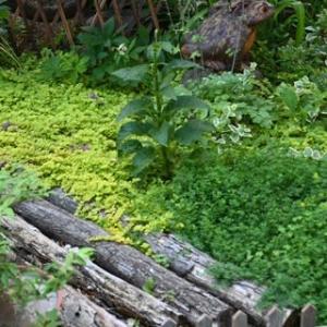 8月はじめの秘密の小庭