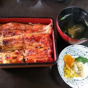 うなぎ名店集まる小田原にて 鰻と鶏料理「柏又」