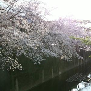 驚き桃の木