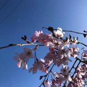 年末よりも春がやって来た今の時期がベストなこと♪