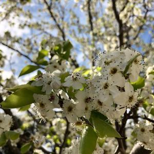 春の訪れと共にメルボルンで注意したいこと