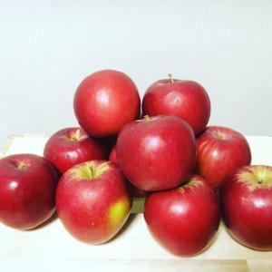 自家製りんご酢作ってみました!