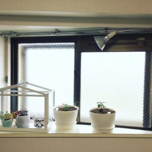 植物用LEDは本当に有効か(その3)