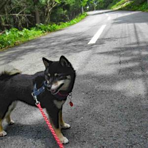 暑い日の犬散歩 ---『天城』