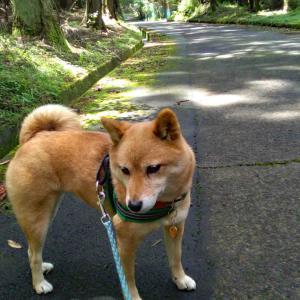 暑い日の犬散歩---『わさび田』