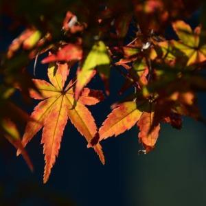 秋の深まりを我が家の庭で