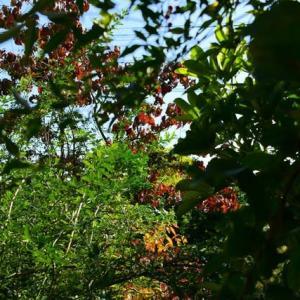 暖かな日射しを受けて庭木の剪定に勤しむ
