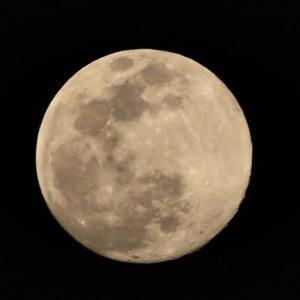 今宵の月は大きく見える