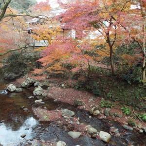 冬紅葉を歩く #3