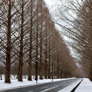 冬の風物詩 その3