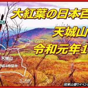 「山行記録&全登山道動画」ピークを迎えた大紅葉の天城山 ― しゃくなげコース周回 令和元年11月10日