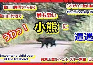 「プロガイド登山動画」「うわっ!最も恐い小熊(クマ)に遭遇!し奇跡的に動画に映っていたその時の模様です。小熊の近くには興奮した母熊がいるので最も危険です!」関東山登りイベント・スキー教室 山の会(登山教室) プロガイド同行登山山行