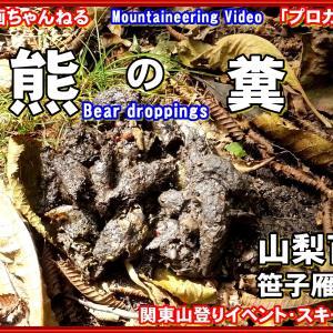 「プロガイド動物・登山動画」「え?こんな所で熊の糞?-今年は熊の目撃が多く、とうとう山梨でも登山者が襲われるなど事故情報が多くどこでも熊対策が必要です。山梨百名山-笹子雁ヶ原摺山」