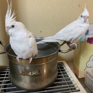 1332:鳥(ちょう)能力