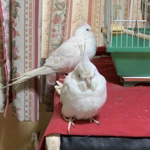 1376:冬の行方を気にする2鳥。