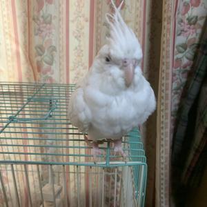 1734:自重しない鳥