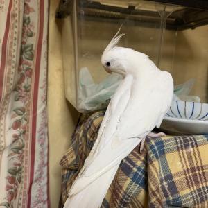 1739:企む鳥。