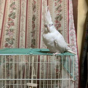 1746:眠い鳥