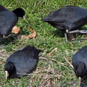 稗田川の野鳥!