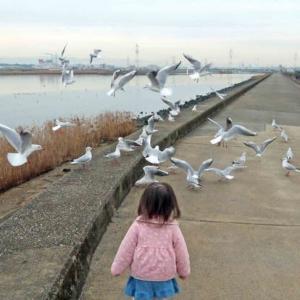 ユリカモメ(百合鴎)の若鳥と成鳥 孫と一緒に!