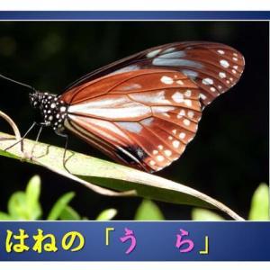 冬の昆虫のお話し 東刈谷保育園!