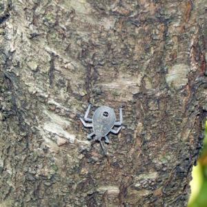 キマダラカメムシ(黄斑亀虫) 神社に41匹も!