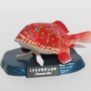 深海魚フィギュア ミドリフサアンコウ