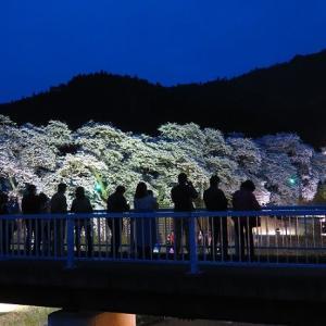 鮎河の夜桜 【お気楽写真館111】
