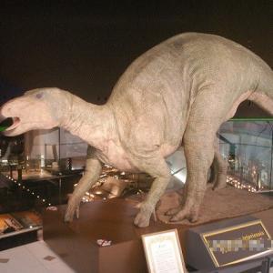 フクイサウルス 【お気楽写真館116】