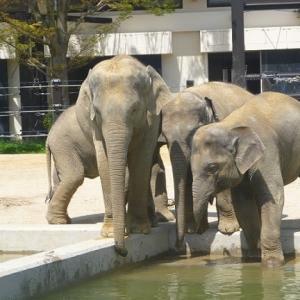 【動物園めぐり15】 ゾウの森